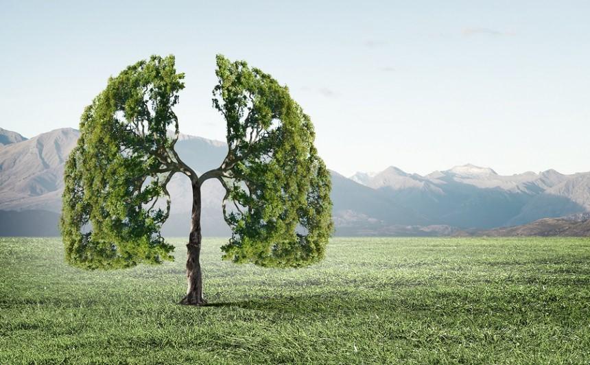 Tree Air
