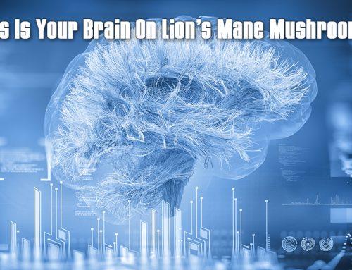 Your Brain On Lion's Mane Mushrooms